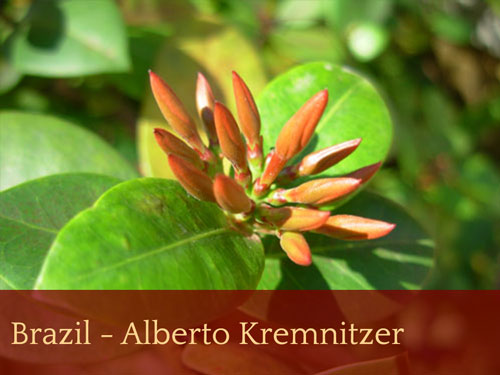 Brazil - Alberto Kremnitzer