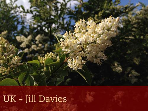UK - Jill Davies