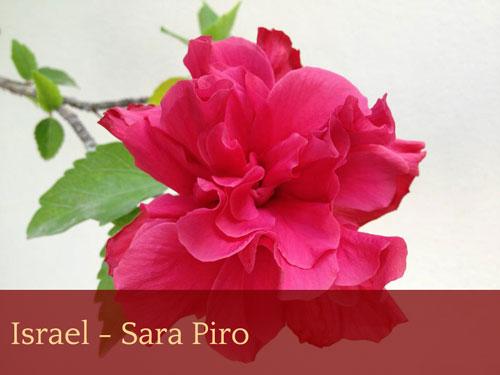 Israel - Sara Piro